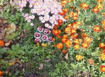 Завладяващата магия на градинските цветя